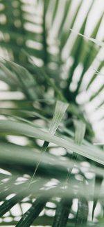 BOW planten ontwikkeling assessment